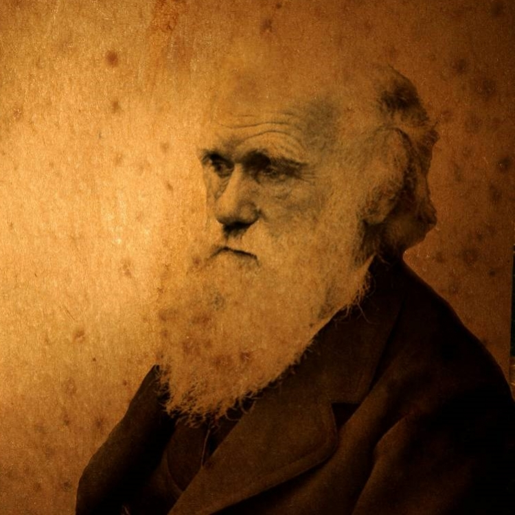 God, Darwin, and Design: Lessons from the Dover Monkey Trail