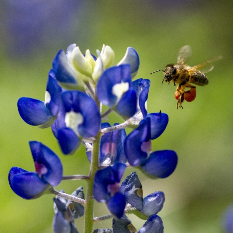 The Buzz About Bees: How They Improve Our Lives
