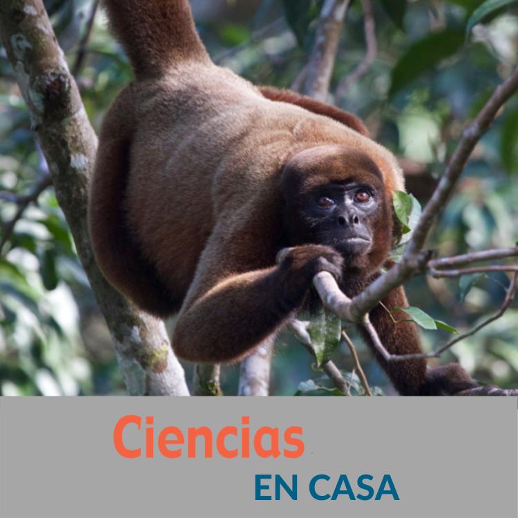 Increíbles Monos Amazónicos