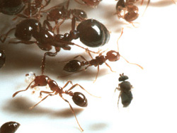 biodiversity_ants