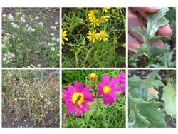 biodiversity_plants
