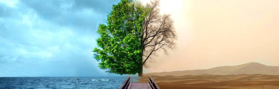 tree duality